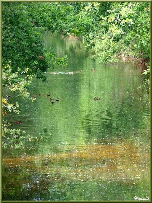 Le Canal des Landes et ses reflets au Parc de la Chêneraie à Gujan-Mestras (Bassin d'Arcachon) - reflets d'été