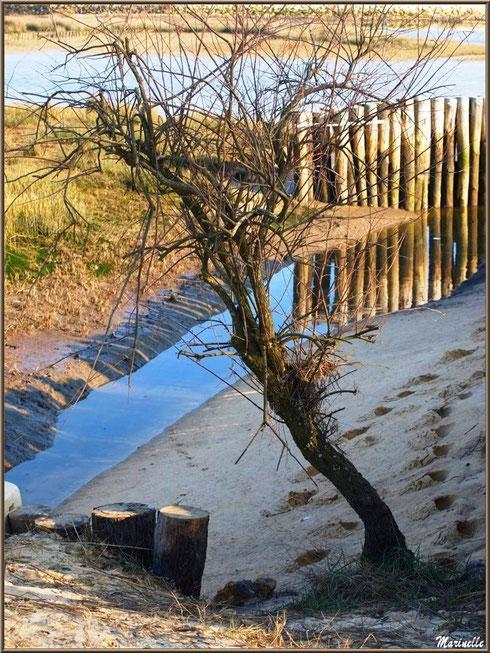 """""""Estey""""(petit chenal) vers la plage, côté Bassin, Sentier du Littoral, secteur Domaine de Certes et Graveyron, Bassin d'Arcachon (33)"""