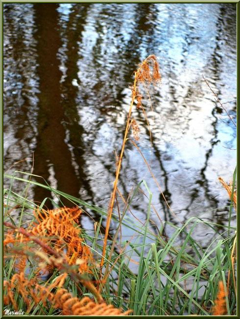 Fougères hivernales, herbacées et reflets sur le Canal des Landes au Parc de la Chêneraie à Gujan-Mestras (Bassin d'Arcachon)