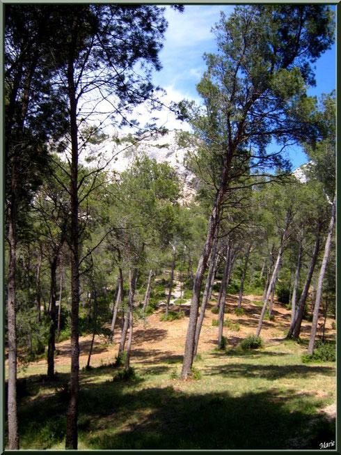 La pinède autour du lac de Peiroou à Saint Rémy de Provence, Alpilles (13)