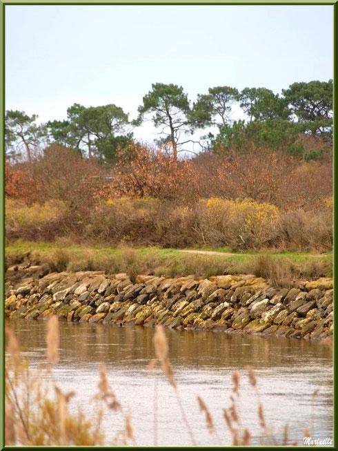La Leyre et le sentier qui la borde, Sentier du Littoral, secteur Port du Teich en longeant La Leyre, Le Teich, Bassin d'Arcachon (33)