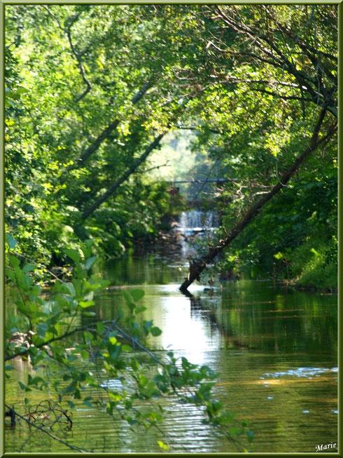 Une des écluses et sa cascade sur le Canal des Landes au Parc de la Chêneraie à Gujan-Mestras (Bassin d'Arcachon) cachée par la végétation