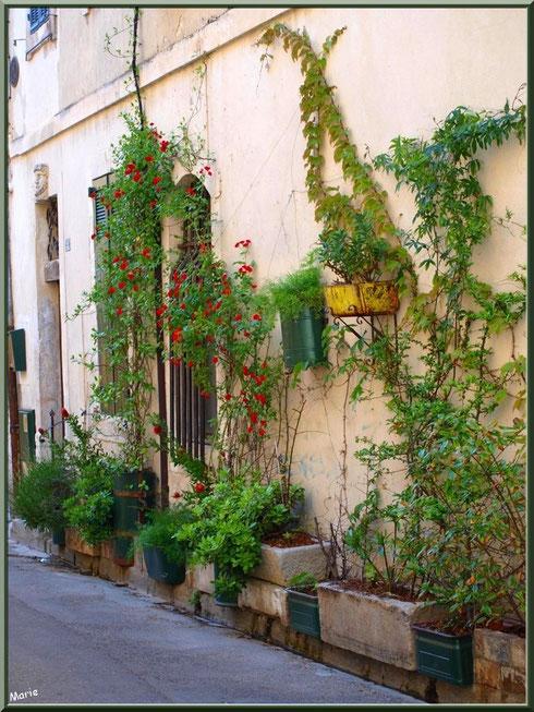 Façade verdoyante dans une ruelle centre ville à Saint Rémy de Provence, Alpilles (13)