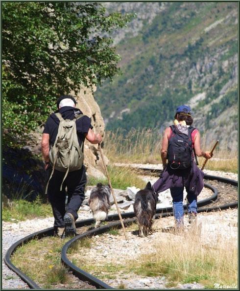 Bergers et leurs chiens sur les hauteurs d'Artouste, Vallée d'Ossau (64)