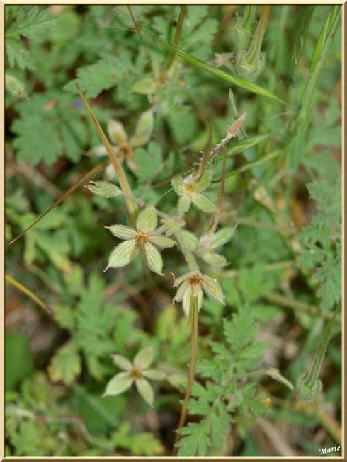 Mélange d'herbacées en campagne à Saint Rémy de Provence, Alpilles (13)