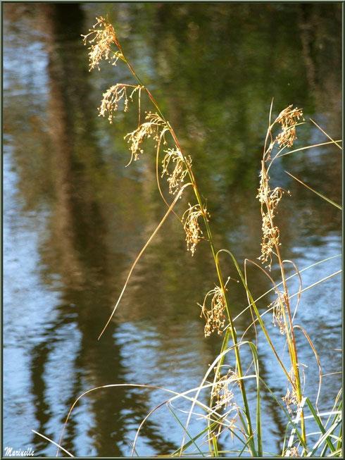Herbacées et reflets sur le Canal des Landes au Parc de la Chêneraie à Gujan-Mestras (Bassin d'Arcachon)