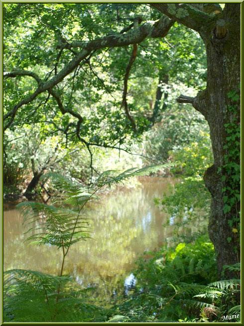Fougères, chêne et reflets sur le Canal des Landes au Parc de la Chêneraie à Gujan-Mestras (Bassin d'Arcachon)