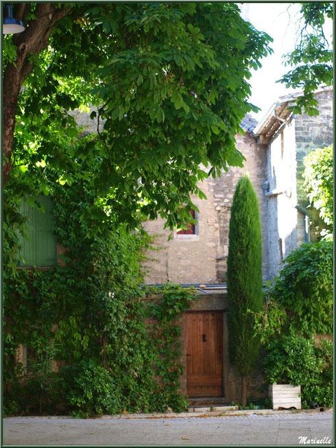 Coin de verdure, Place Favier, centre ville à Saint Rémy de Provence, Alpilles (13)
