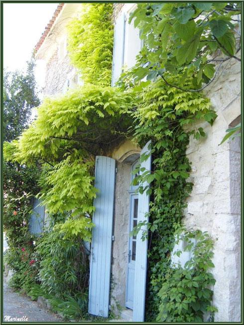Façade verdoyante au détour d'une ruelle dans le village de Le Beaucet, Lubéron (84)