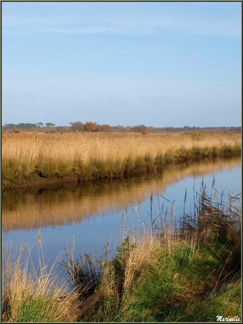 La Leyre et ses reflets, Sentier du Littoral, secteur Port du Teich en longeant La Leyre, Le Teich, Bassin d'Arcachon (33)