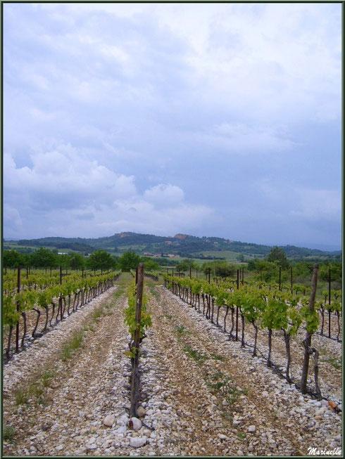 Vignoble dans le Lubéron (84), ici aux environs de Roussillon