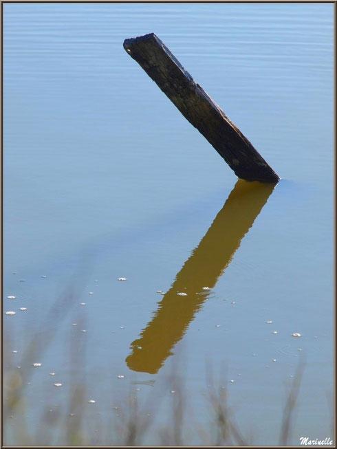 Piquet dans un réservoir et son reflet, Sentier du Littoral, secteur Moulin de Cantarrane, Bassin d'Arcachon