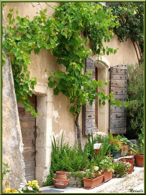 Pas de porte à la treille dans le village d'Oppède-le-Vieux, Lubéron (84)