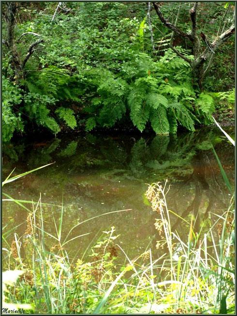 Herbacées, fougères, chênes et reflets sur le Canal des Landes au Parc de la Chêneraie à Gujan-Mestras (Bassin d'Arcachon)