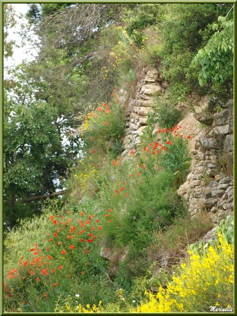 Végétation aux alentours de l'Ermitage Saint Gens, village de Le Beaucet, Lubéron (84)