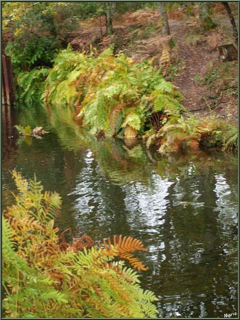 Fougères automnales et reflets sur le Canal des Landes au Parc de la Chêneraie à Gujan-Mestras (Bassin d'Arcachon)