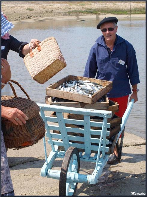 """Les cagettes de sardines empilées sur un """"brout"""" sont maintenant transportées vers la criée - Fête du Retour de la Pêche à la Sardine 2014 à Gujan-Mestras, Bassin d'Arcachon (33)"""