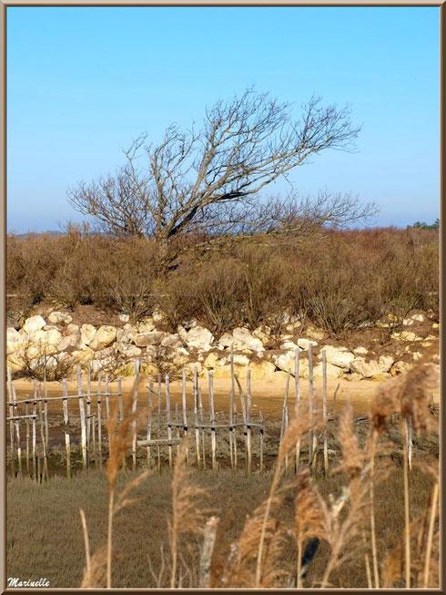 Marais et digue en hiver, Sentier du Littoral côté Bassin, secteur Moulin de Cantarrane, Bassin d'Arcachon