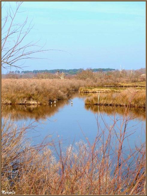 Végétation hivernale des réservoirs, Sentier du Littoral, secteur Domaine de Certes et Graveyron, Bassin d'Arcachon (33)