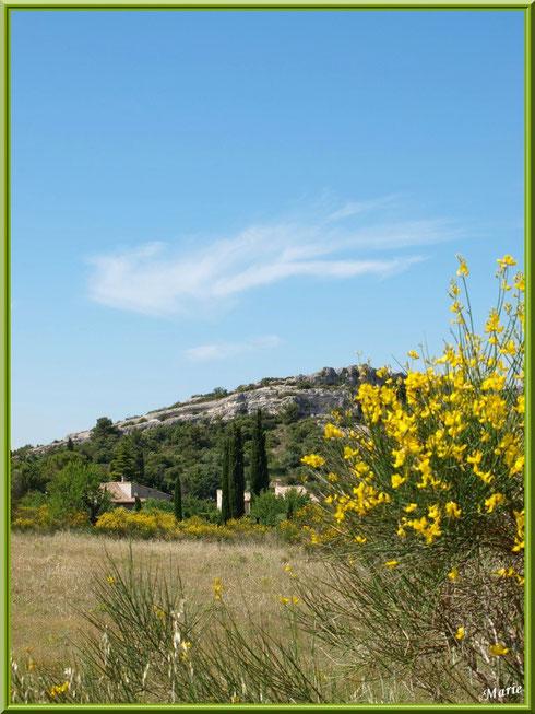 La campagne autour du village d'Eygalières dans les Alpilles (Bouches du Rhône)