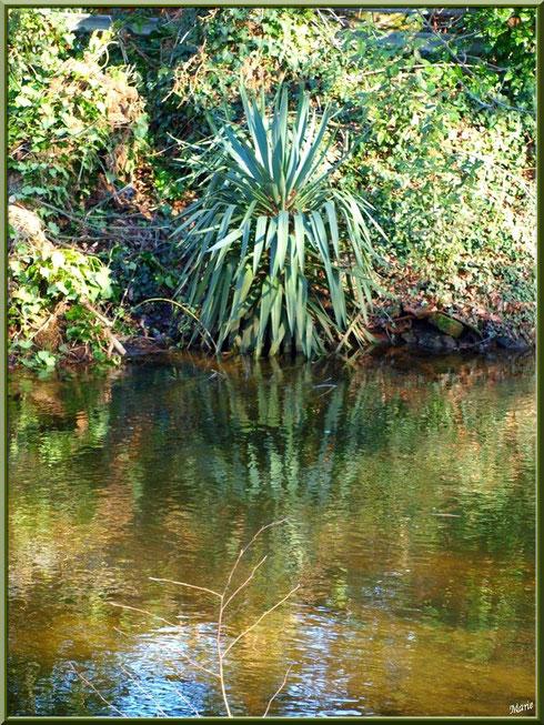 Lierre, Yucca et reflets en bordure du Canal des Landes au Parc de la Chêneraie à Gujan-Mestras (Bassin d'Arcachon)
