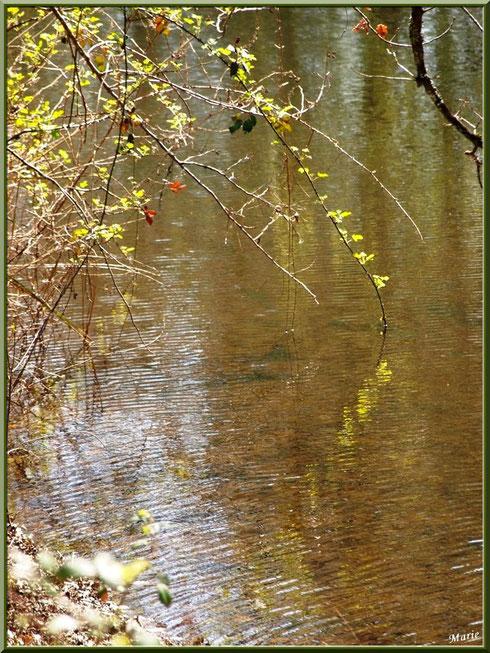 Roncier et reflets sur le Canal des Landes au Parc de la Chêneraie à Gujan-Mestras (Bassin d'Arcachon)