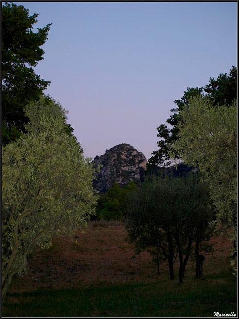 Soleil couchant sur une oliveraie et les Alpilles depuis Saint Rémy de Provence, Alpilles (13)