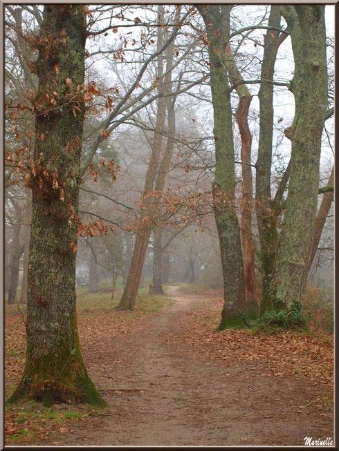 Le sentier longeant le Canal des Landes dans la brume au Parc de la Chêneraie à Gujan-Mestras (33)