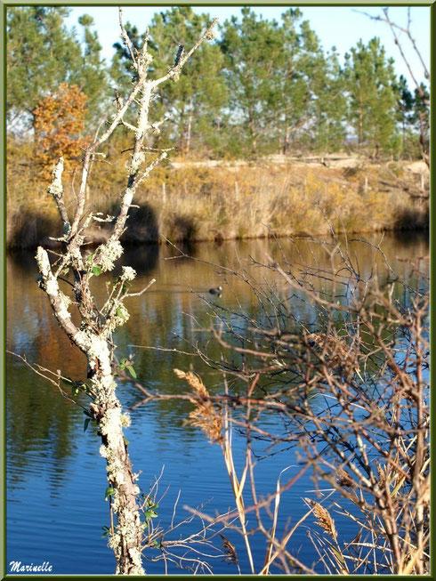 Quand le printemps montre le bout de son nez en bordure des réservoirs, Sentier du Littoral, secteur Moulin de Cantarrane, Bassin d'Arcachon