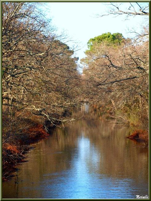 Le Canal des Landes et ses reflets hivernaux au Parc de la Chêneraie à Gujan-Mestras (33)