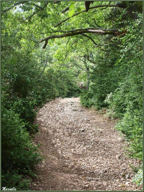 Chemin pierreux et sinueux montant vers la source miraculeuse de l'Ermitage Saint Gens, village de Le Beaucet, Lubéron (84)