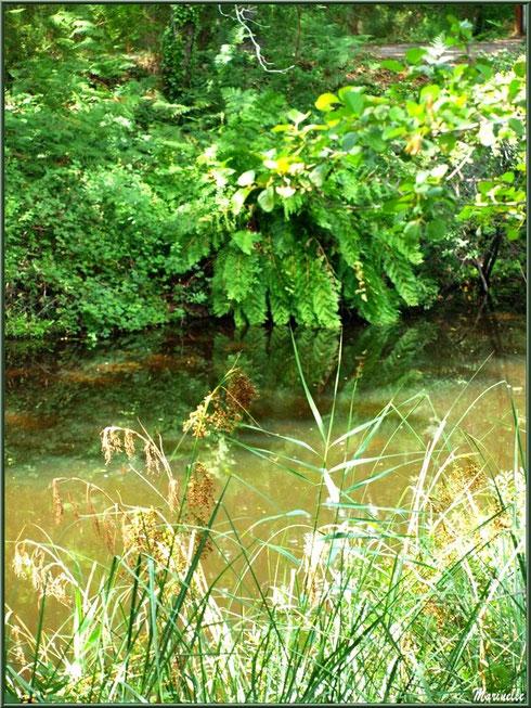 Herbacées, fougères, arbrisseaux et reflets sur le Canal des Landes au Parc de la Chêneraie à Gujan-Mestras (Bassin d'Arcachon)