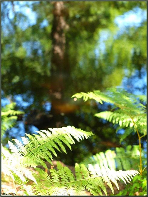 Fougères et reflets en bordure du Canal des Landes au Parc de la Chêneraie à Gujan-Mestras (Bassin d'Arcachon)
