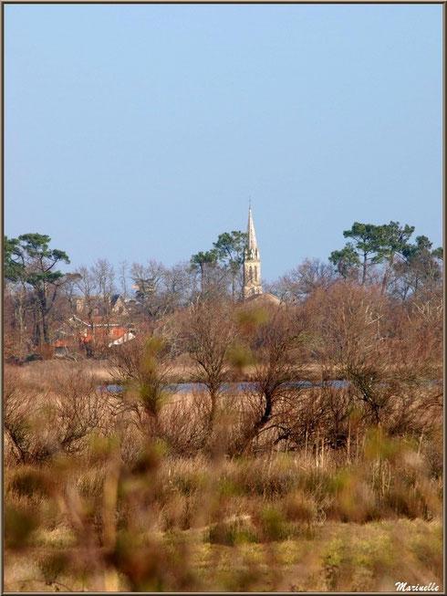 Végétation des marais entourant les réservoirs et le clocher de l'église d'Audenge en toile de fond, Sentier du Littoral, secteur Domaine de Certes et Graveyron, Bassin d'Arcachon (33)