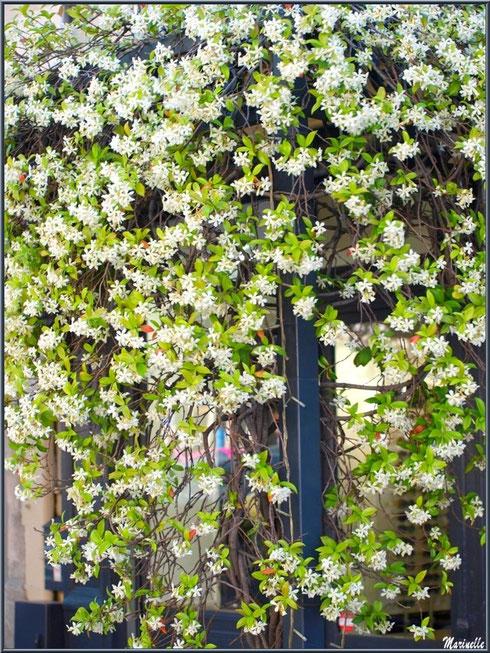 Porte à la treille fleurie dans une ruelle à Saint Rémy de Provence, Alpilles (13)