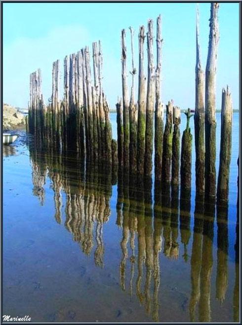 Piquets et reflets au port d'Arès (Bassin d'Arcachon)