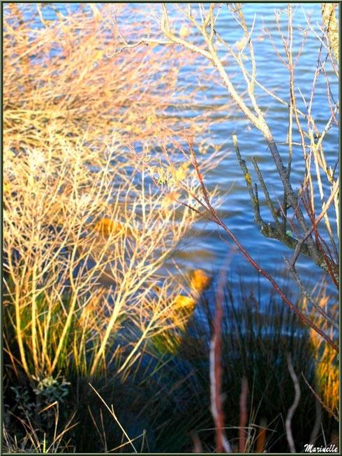 Végétation hivernale colorée en bordure d'un réservoir, Sentier du Littoral, secteur Domaine de Certes et Graveyron, Bassin d'Arcachon (33)