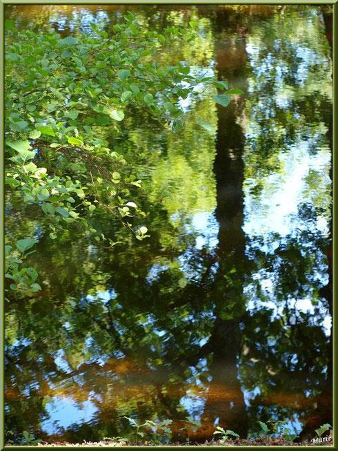 Reflets impressionnistes sur le Canal des Landes au Parc de la Chêneraie à Gujan-Mestras (Bassin d'Arcachon)
