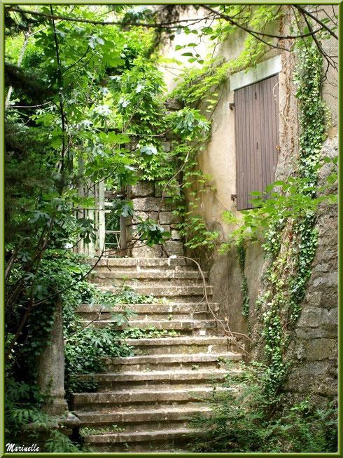 Escalier et maison à la treille, village d'Oppède-le-Vieux, Lubéron (84)