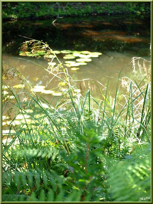 Fougères et herbacées en bordure du Canal des Landes au Parc de la Chêneraie à Gujan-Mestras (Bassin d'Arcachon)