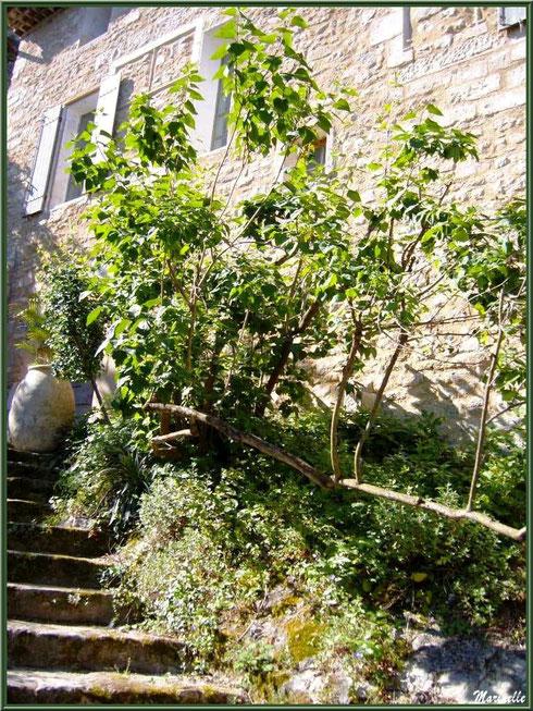Escalier menant à une maison au détour d'une ruelle dans le village de Le Beaucet, Lubéron (84)