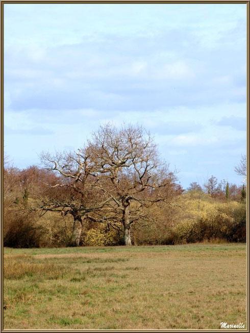 Végétation printanière dans les pâturages des prés salés, Sentier du Littoral secteur Pont Neuf, Le Teich, Bassin d'Arcachon (33)