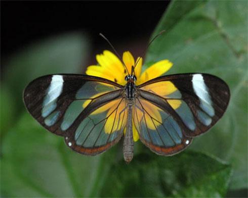 Foto de mariposa posando sobre una flor amarilla