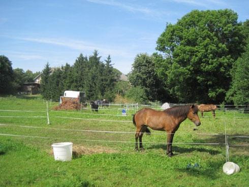 auch die Pferde hatten es gut