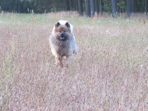 am frühen Morgen kann er springen, der Hund