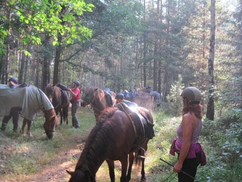kleine Pause im Wald
