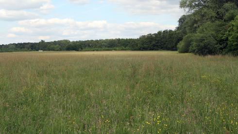 Artenreiche Wiesen auf dem Standortübungsplatz Handorf-Ost  Bild: lernsite/Joachim Eberhardt
