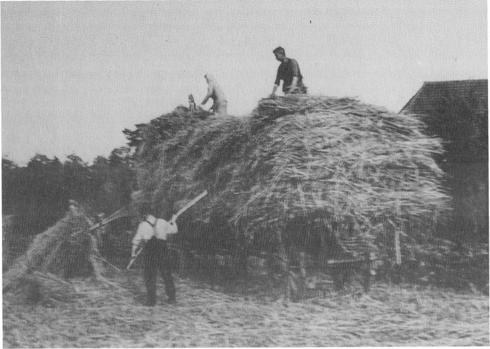Einfuhr des Getreides