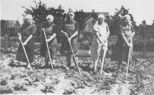 Frauen beim Rübenhacken 1948