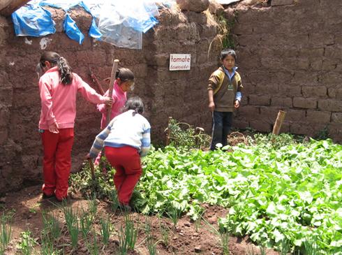Enfants jardinant dans le Potager Educatif de l'école de Chitapampa (Cusco - Pérou)